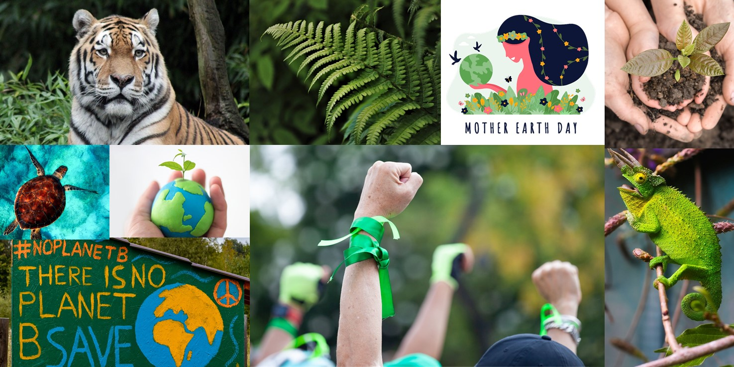 montage photo of climate action showing tiger, turtle, lizard