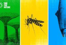 Photo of Save the Environment but not Nyamuk, boleh tak?