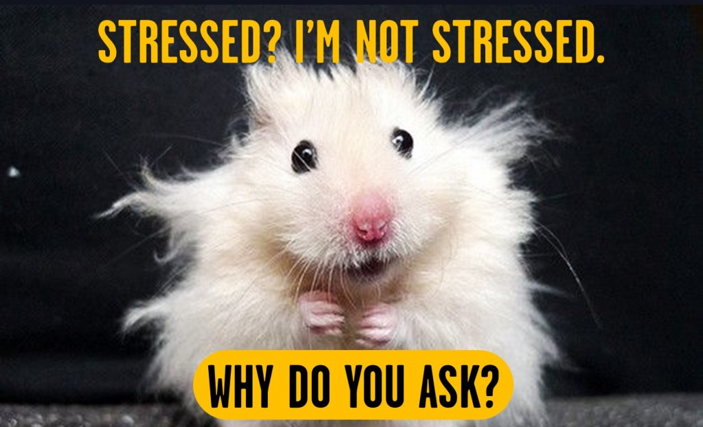 "meme of a stressed out rat with copy that says ""Stressed? I am not stressed. Why do you ask?"""